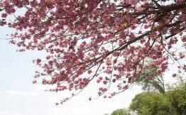 高窓の里(春)