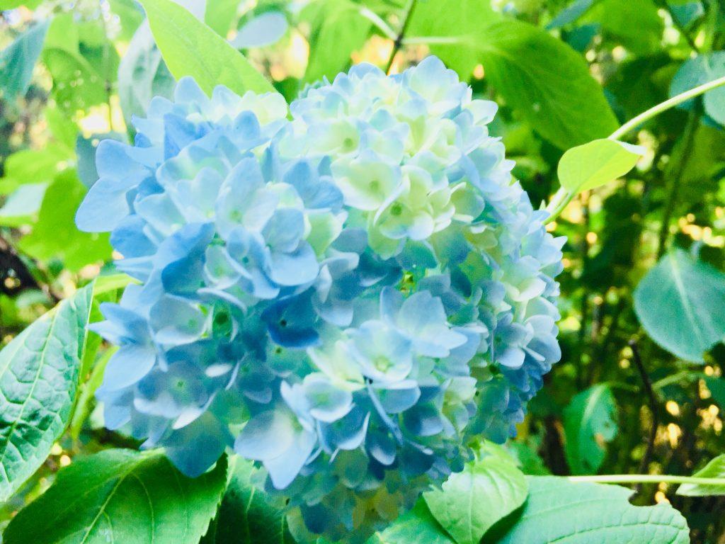 (平成30年6月4日撮影)